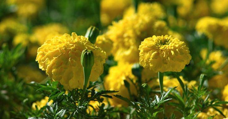¿Qué flores plantar en primavera?. La primavera es la estación del año en la que todo vuelve a vivir luego de los áridos meses de invierno. Los árboles de flores y los tulipanes, los claveles y los jacintos que plantaste en otoño emergen del suelo con tonos de amarillo, rojo y violeta. La primavera es también la estación para plantar semillas y comenzar a producir flores de colores ...