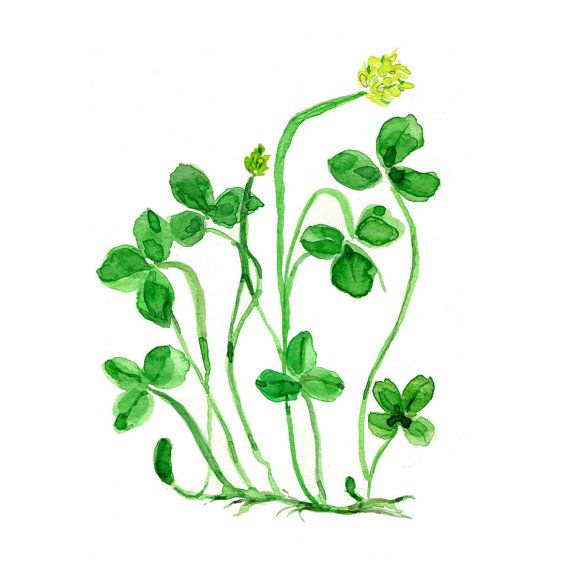 Clover plant art print of original watercolor painting  Kelly  green, Botanical,  lucky clover, Shamrock, luck of the Irish, St Patric's da