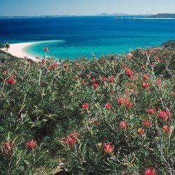 Windswept slopes at Keppel Bay Islands National Park in Queensland's Capricorn Coast (Australia).