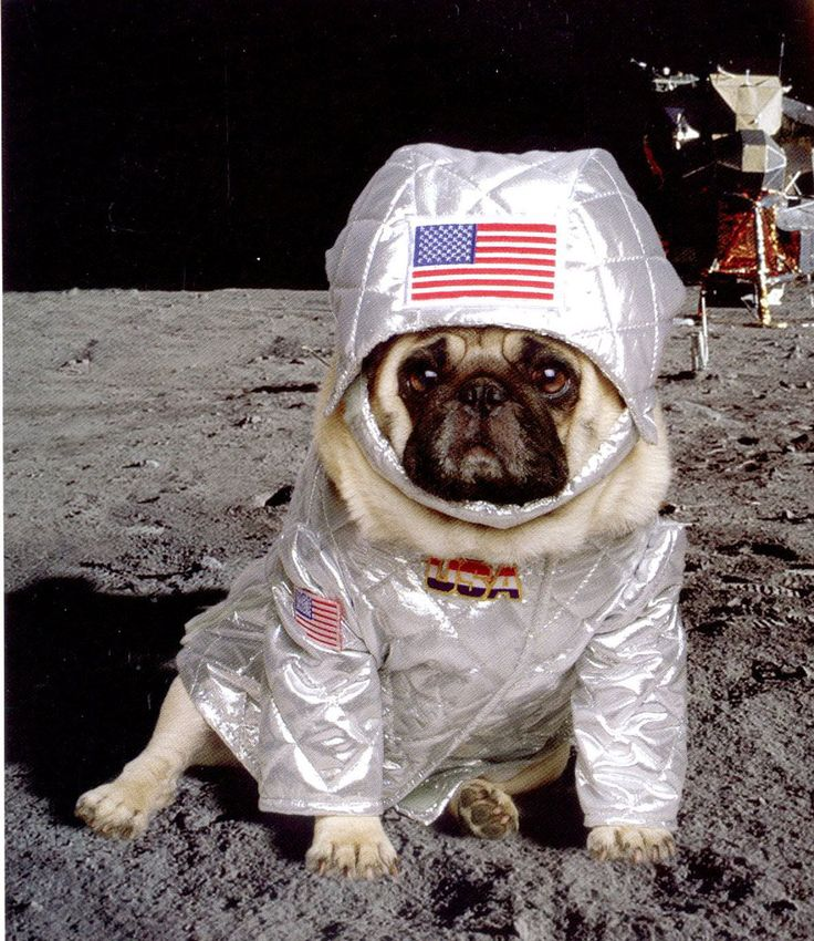 Space pug. | Pugs are Almost as Good as Cats | Pinterest ...