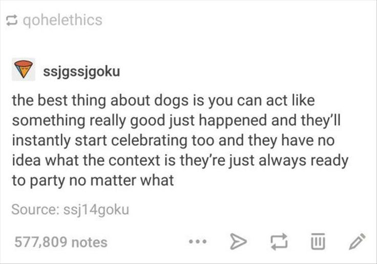 DOGGOS ARE GREAT