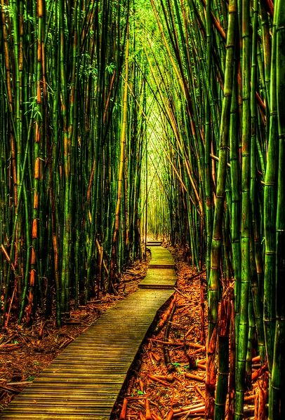 Bamboo Forest-Kauai, Hawaii.. Been here<3 it's kinda slippery.. Going to hike today!!!