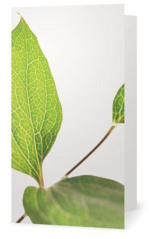 Clematis. Cards for florists. Gift card for flower arrangements. Scandinavian design. Jäderberg & Co.