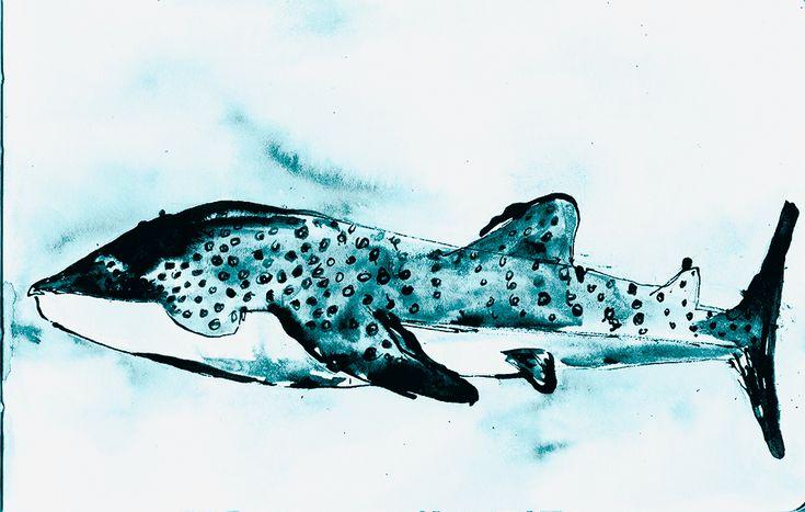 Digital print on fine art paper   21 x 14cm  #art #whaleshark #illustration