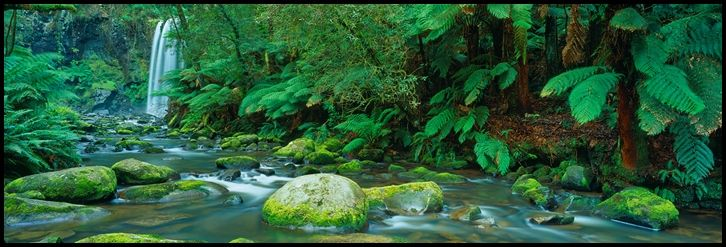 Aire's Jewell - The Aire River winds it's way through the Great Otway National Park, eventually spilling into the sea along Victoria's Great Ocean Road. In the upper reaches, the crystal clear water bubbles and tumbles over moss covered rocks, flowing through lush fern lined gullies typical of the Otway rainforest. But without doubt, the crown jewell of the Aire is Hopetoun Falls, the most classically beautiful waterfall in all the Otways.
