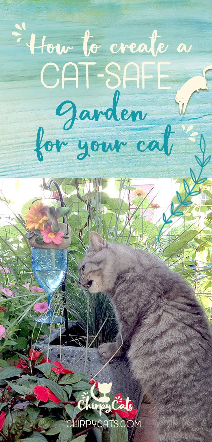 A Cat Safe Garden Of Non Toxic Plants Your Cats Will Love Cat Safe Plants Cat Plants Cat Friendly Plants