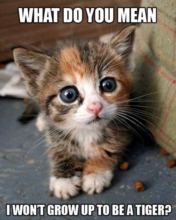What do you mean I won't grow up to be a tiger?