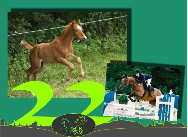 Türchen 22 - Warum es das Dressurpferd im Sinne der Zucht nicht gibt!