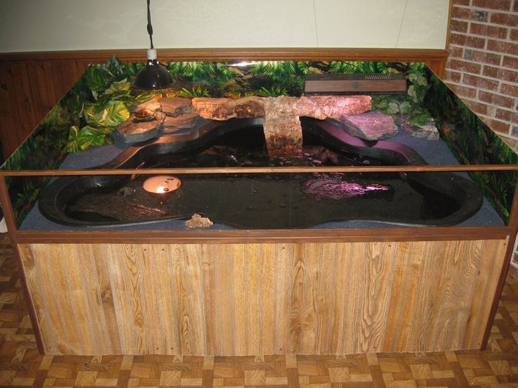 Indoor turtle pond turtle for tyler pinterest pond for Indoor fish pond ideas