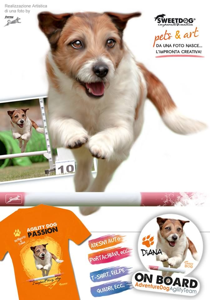 Dog: Diana (Jack Russell Terrier)