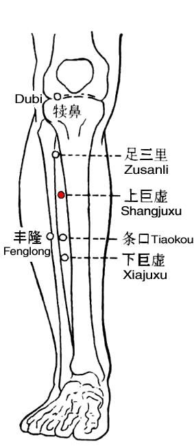 Shangjuxu (ST37,上巨虚) Indication ①Borborygmus, abdominal pain, acute or chronic diarrhea, constipation, acute appendicitis, and other diseases of the stomach and intestines; ②pain or paralysis of the lower extremities.