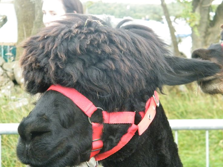 Pictures from Tullamore Agricultural Show 2013