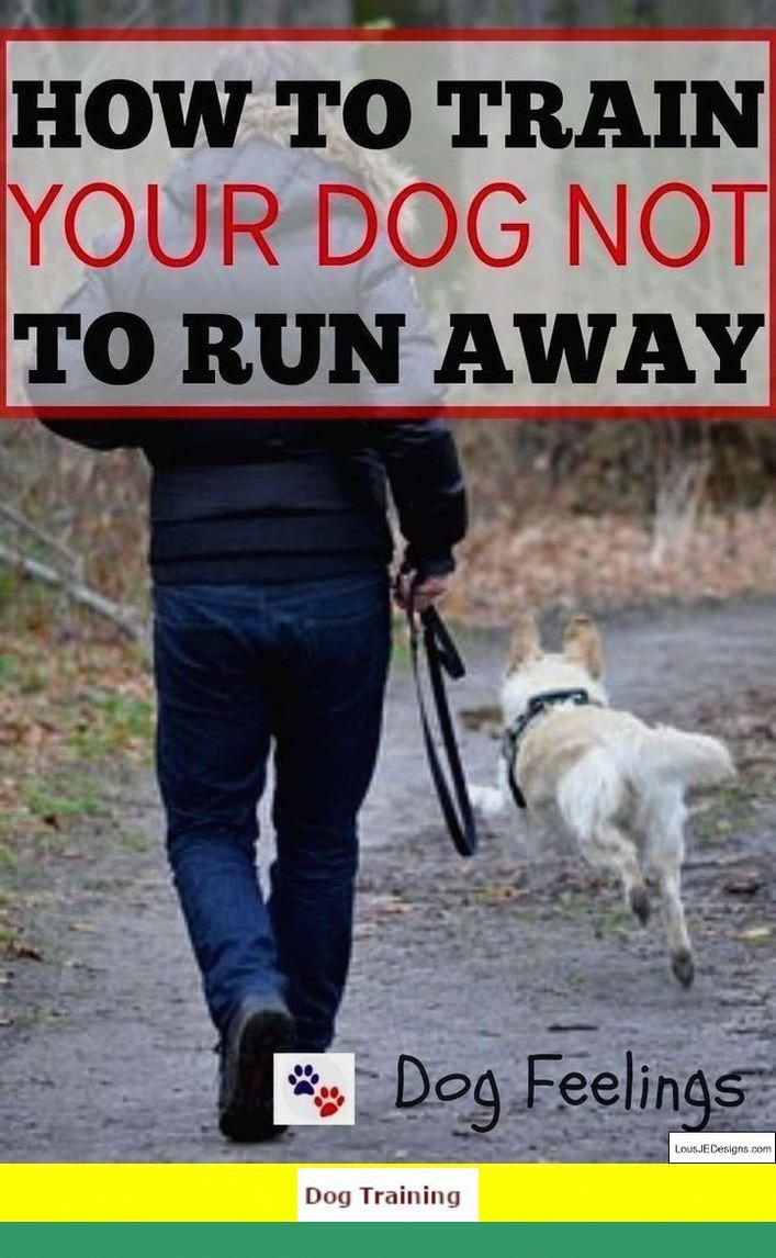 1 Teach Your Dog To Walk Off Leash And Clicker Training Operant