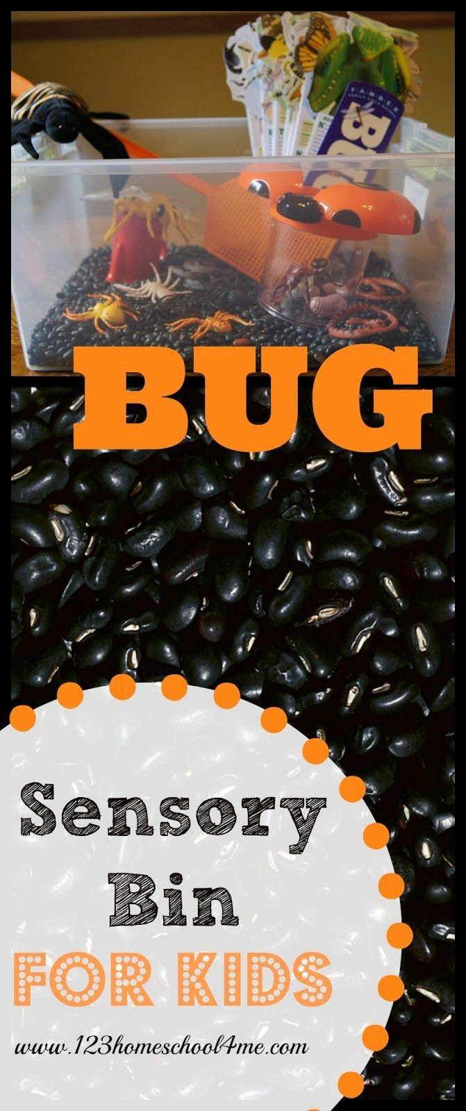BUG Sensory Bin for Toddlers and Preschoolers - great for a bug or insect