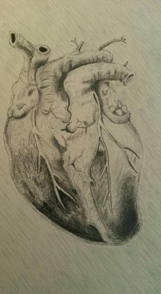 Anatomisches Herz Kohlezeichnung anatomical hart charcoal painting