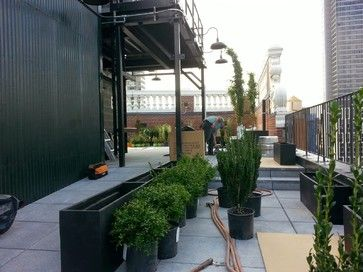 we used clump birch trees, sky pencil ilex, boxwood, creeping roses, drip irrigation system planted in black fiberglass fiberglass planter boxes or planters, custom built wood planter boxes for the shrub roses. Roof garden in one day installed by the team at New York Plantings Garden Designers and landscape contractors NYC for a grand opening celebration of the Manhattan penthouse garden level of a high end residential condominium common space terrace garden or rooftop garden.347-558-7051