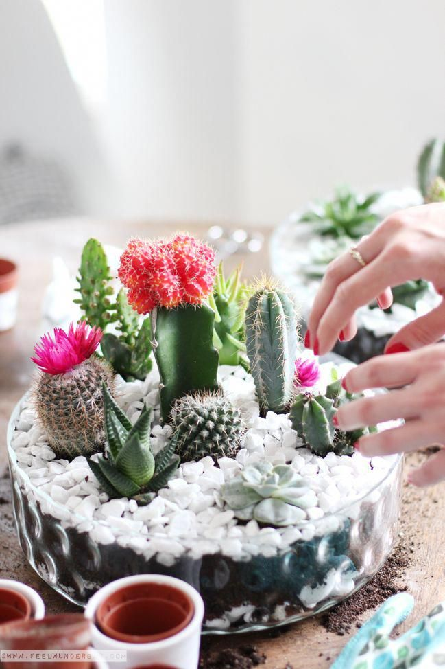 A DIY Tabletop Cactus u0026 Succulent Garden is not as hard to do, as you might  think. In this easy step by step tutorial I am showing you how to do it.