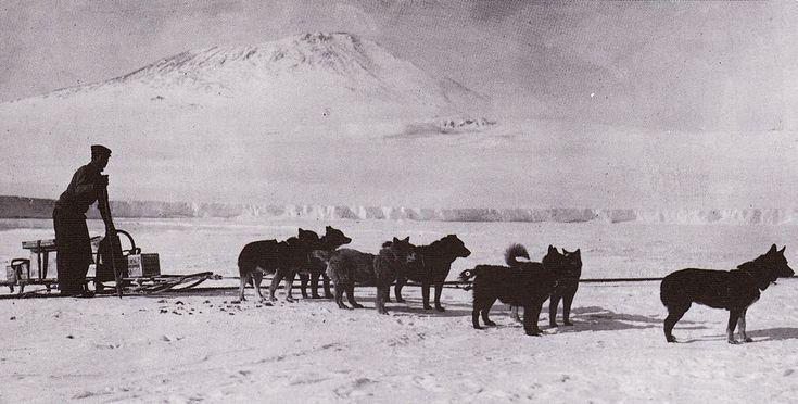 Экспедиция Роберта Скотта на Южный полюс. Ездовые собаки экспедиции.