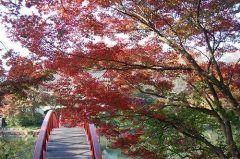 横浜市青葉区にあるこどもの国秋になって紅葉が進んでいます いろんな遊具やアウトドアスポーツができるこどもの国だけどこの時期は紅葉狩りにもぴったり それに合わせたフォトコンテストもあるみたいですよ tags[神奈川県]
