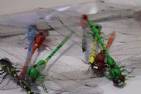 Dragonflies, Arts & Crafts - Super Floral Distributors - Decor, Floral accessories and Crafters accessories in Cape Town
