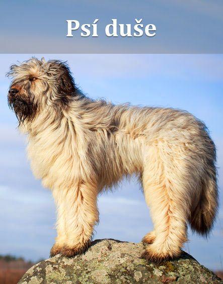 Každý, kdo nejen vlastní, ale také miluje svého psa, vám to potvrdí. Psí duše je velmi statečná, ale zranitelná, věrná až za hrob, schopná velkých obětí a milující zcela bez výhrad...