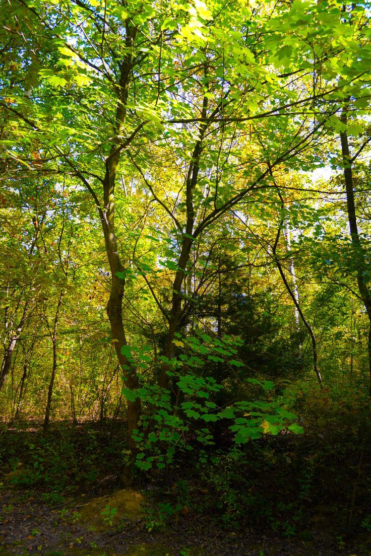 Arborétum itt: Kecskemét, Bács-Kiskun megye