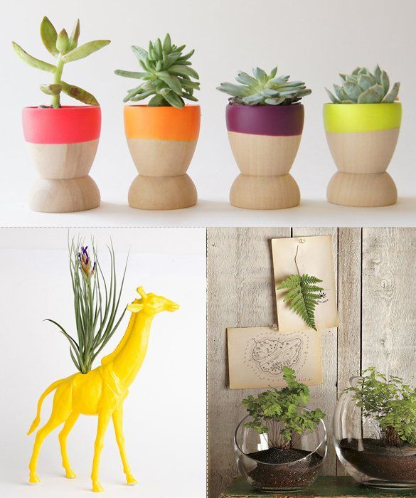 stunning house plants delivered. Decorating With Plants 85 best Beautiful Houseplants images on Pinterest  Indoor plants
