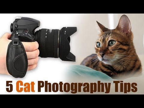 5 Amazing Cat Photography Tips for Incredible Photos - YouTube