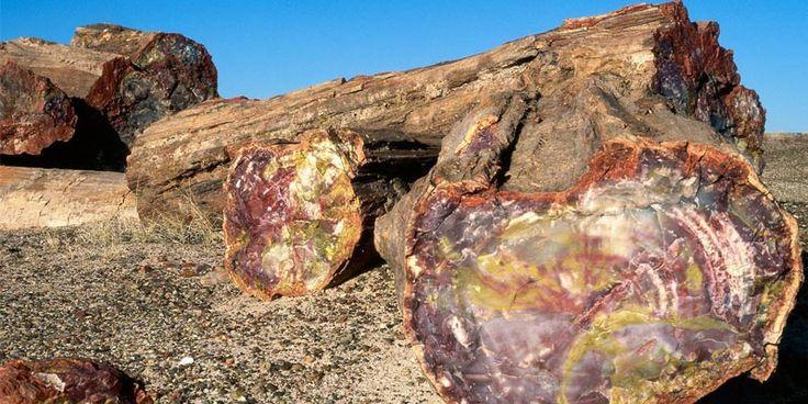 Deşertul pictat din Petrified Forest, Arizona
