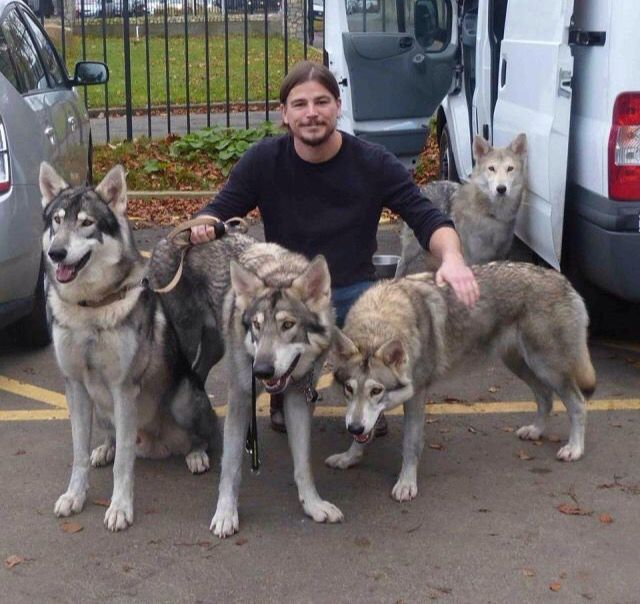 Josh Hartnett & his Pak of Wolves ☺️