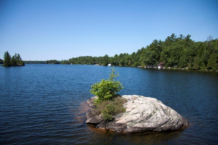 Mini island in Otter Lake, just south of Parry Sound.... a spring fed pristine and great swimming body of water