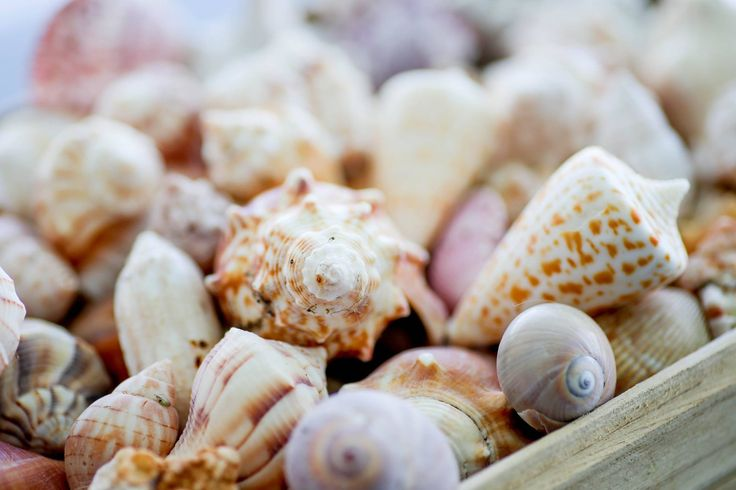 Shells, shells and shells, oh my! Here are some tips on how to find some of your favorites.