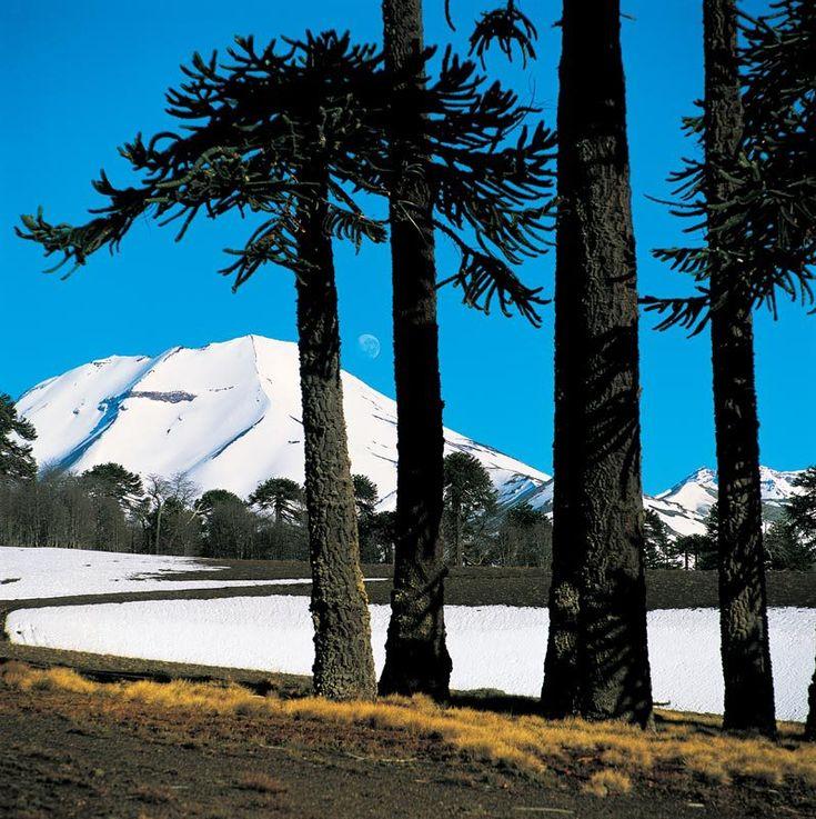 Parque Nacional Tolhuaca, Volcán Lonquimay ,CHILE
