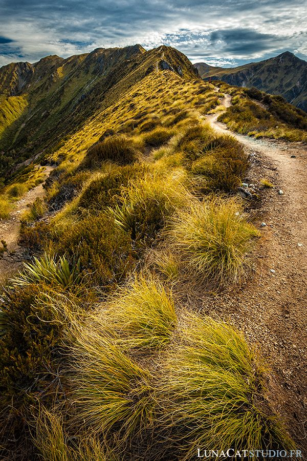 outdoor nature photography. new zealand landscape photography outdoor nature
