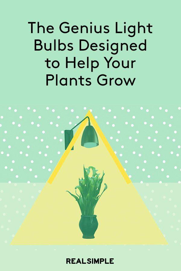 Ge Grow Light Led Light Bulbs Help Indoor Plants Grow Grow Lights Grow Light Bulbs Growing Plants Indoors