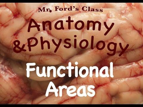 Nervous System : Functional Areas of the Brain (10:13)