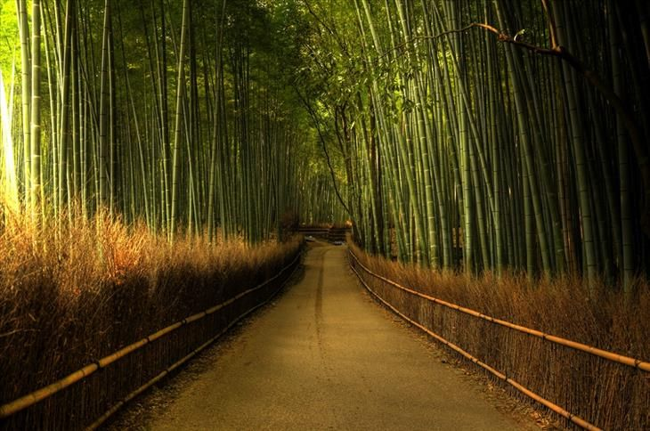The beautiful bamboo forest of Sagano can be found along the western outskirts of Kyoto, Japan. The Bamboo Grove is one of the most visited tourist destinations in the entire country. While you're in the forest, you won't want to miss Tenryu-ji Temple, which is just a short walk away!
