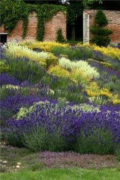 Only six plants... planted in drifts with sun-loving, drought-loving perennials...