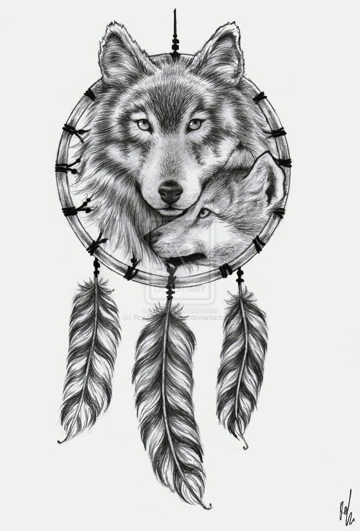 wolf dreamcatcher drawing related - photo #25