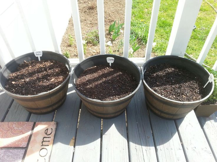 "Herb seeds in plastic ""rustic"" barrels from dollar general"
