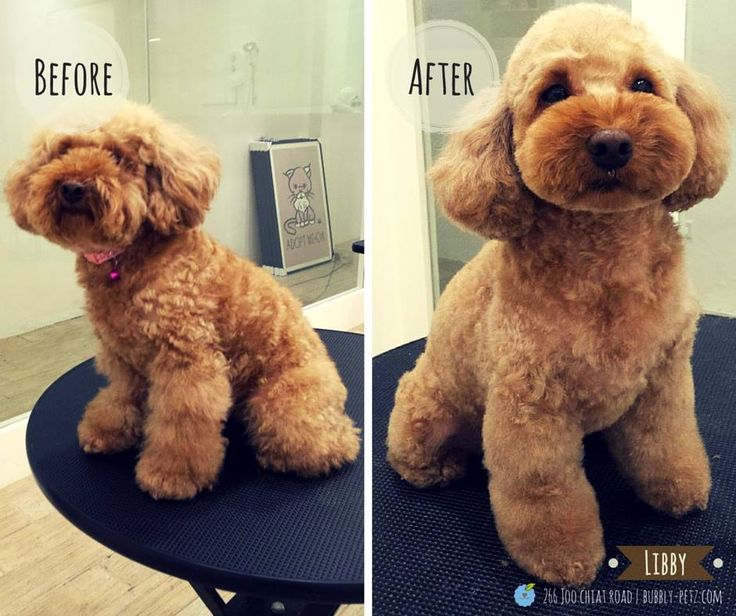 21 best dog grooming works images on pinterest dog grooming dog libby solutioingenieria Gallery