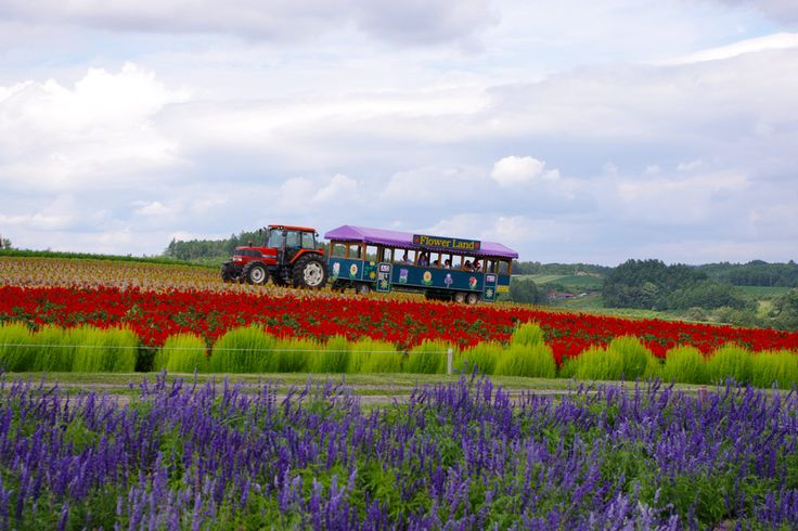 Hokkaido in summer is so beautiful. Make sure to check out the flower fields of Biei and Furano as well as UNESCO World Heritage Shiretoko.