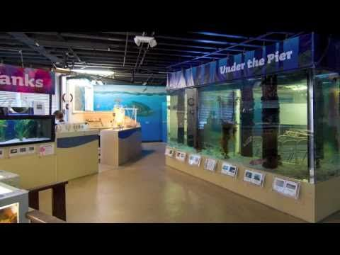 Santa Monica Pier Aquarium Tickets - Save Up to 55% Off