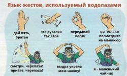 Те, кто обучают дайвингу - насколько хорошо говорят по-русски?