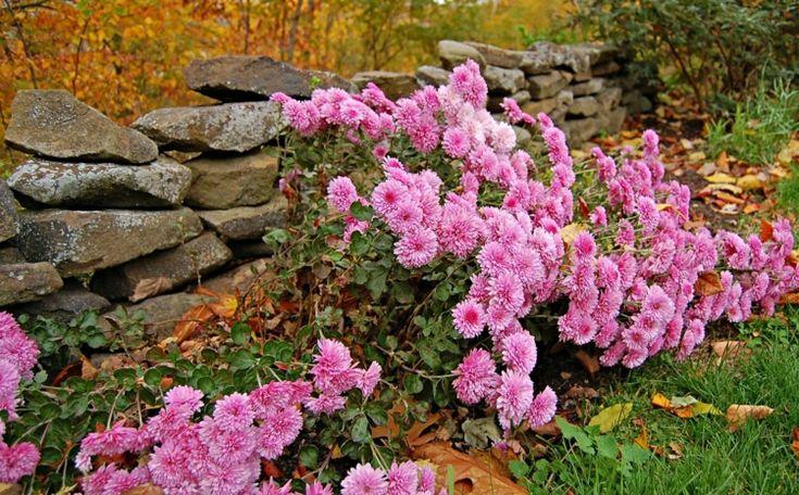 Die besten 17 Bilder zu Garten auf Pinterest Gärten, Feuerstellen - feuerstelle garten naturstein