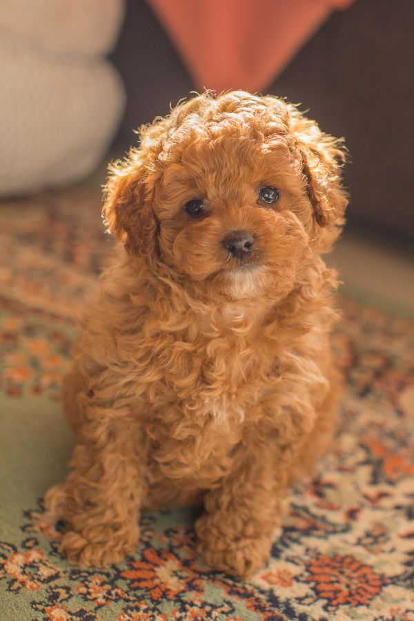 Cute Animals Make Us Feel All Warm Inside And Cute Puppies Can Be