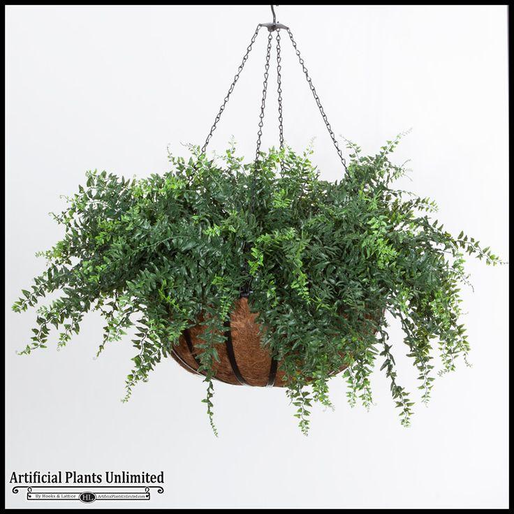 Buckler Fern in 22in Hanging Basket, Outdoor Rated