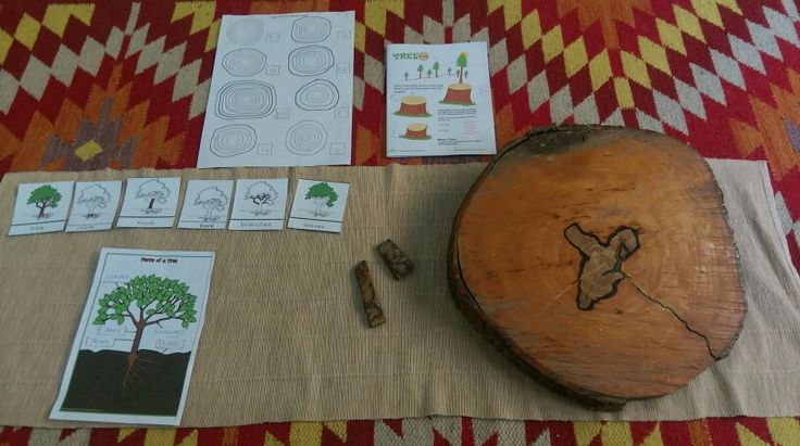 Studying about tree bark, tree trunk and tree rings