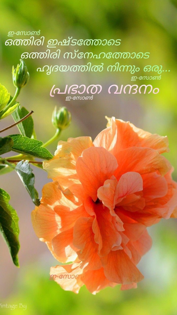 Pin By Eron On Good Morning Malayalam Good Morning Wishes Sunday Wishes Good Morning Quotes