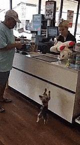 C'mon, man. Gimme my toy!